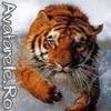 Avatare Tigri