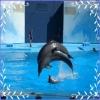 Jocuri cu Delfini