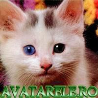 Poze Pisici Si Catei