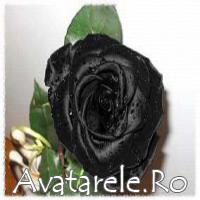 Trandafiri Pentru Avatar