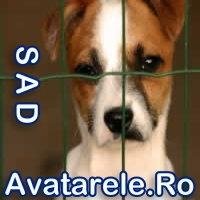 Avatar Trist