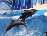 Poze Delfini